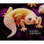 カプセルQミュージアム ヤモリ大全2 クレステッドゲッコー(Crested Gecko)3:ヒョウモントカゲモドキ ブリザード 海洋堂 ガチャポン