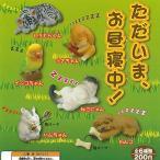 ただいま お昼寝中! 全6種セット 動物フィギュア 共同 ガチャポン ガチャガチャ ガシャポン