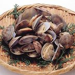 あさり殻付き L 500g(40〜50粒)  輸入 冷凍あさり  あさり アサリ 貝 冷凍食品 業務用