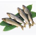 冷凍鮎 1kg(10尾) 魚 あゆ 冷凍 食材