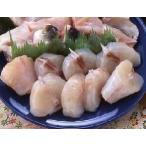 《秋冬限定・9〜2月》 ふぐぶつ切り(鍋用) 500g さえき  河豚 鍋 ふぐちり てっちり 冷凍食品 業務用
