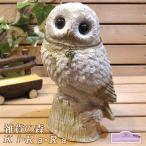 Yahoo!雑貨の森 Ki・Ra・Ra Yahoo!店ふくろう 置物 つぶらな瞳がとってもキュート ナチュラルな動物の貯金箱 フクロウ リアルな動物雑貨