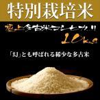 プロも認める 美味しい お米 極上の多古米 萩原農場 の 特別栽培米 高級米 多古米 コシヒカリ 【精米】 10kg 平成28年産 新米