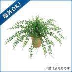 (造花 フェイクグリーン 人工観葉植物) (屋外OK)アジアンタムブッシュx15(プラスチック)(GL105)