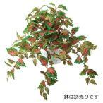 (壁面緑化 造花 フェイクグリーン 人工観葉植物) コリウスブッシュ(DF13)