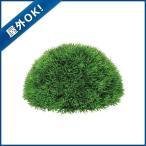 25cmグリーングラスハーフボール プラスチック  ツートングリーン