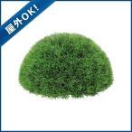 30cmグリーングラスハーフボール プラスチック  ツートングリーン