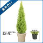 (造花 フェイクグリーン 人工観葉植物)(屋外OK)150cmゴールドクレストツリー(プラスチック)(GL122)