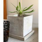 花瓶 SOLID PLANTER CUBE L