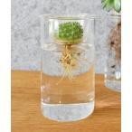 花瓶 【BULB VASE】クリアショート 229501