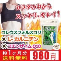 ゆうパケット 送料無料 コレウスフォルスコリ フォースコリー ダイエット サプリ 脂肪 燃焼 L-カルニチン コエンザイムQ10 ハーブ フォースリン スッキリ