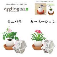 タマゴの中から植物が育つ、まるで本物のたまごのような eggling たまごは陶器でできていて、中に...