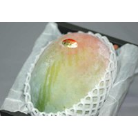 栽培量が少なくたいへん希少価値のあるマンゴーです。 果肉はきれいなオレンジ色で、濃厚な甘さとなめらか...