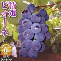 品評会で優秀賞をもらった、岡山県でも指折りの生産者、園山さんが作る特選品質のピオーネです。 糖度は1...