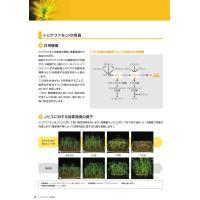 カウンシルエナジー1キロ粒剤 1kg|agrimart|06