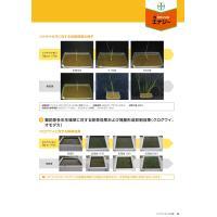 カウンシルエナジー1キロ粒剤 1kg|agrimart|09
