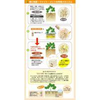 灌注用植物活性剤 ファイト・メット 450g|agrimart|02
