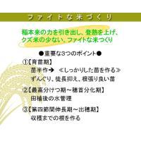 水田用投込発泡剤 ファイト・アップ(米用)500g|agrimart|02