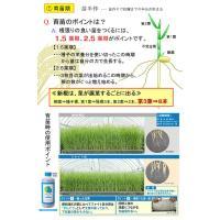 水田用投込発泡剤 ファイト・アップ(米用)500g|agrimart|03