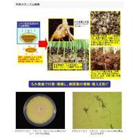 水稲微生物殺菌剤 タフブロック 100g agrimart 02
