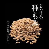 富山県産「ミルキークイーン」種もみ1Kg|agrimart|02