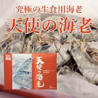 天使の海老(生食用)30~40尾入 1KG
