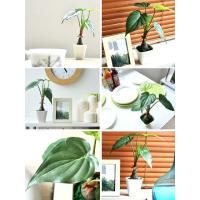 光触媒 人工観葉植物 アロカシア 30cm 卓上 消臭 抗菌 卓上観葉植物 水やり不要 かわいい 光触媒人工観葉植物