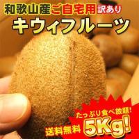 和歌山産キウィ(キウイ)フルーツご自宅用 たっぷり5kg フルモニスムージーに最適 送料無料