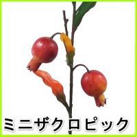 (造花・秋)秋の実物シリーズ・ミニザクロピック・ざくろ・石榴 9761