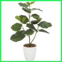(人工観葉植物)ウンベラータポット 80cm×52cm / 造花・インテリア・ディスプレイ・グリーン