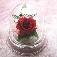 小さなドーム型のケースに真っ赤なバラを1輪アレンジしました。どこにでもおけるお手軽サイズ♪すべて、プ...