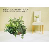 ポトスとモンステラの寄せ植えポット (屋外対応 造花 インテリア 観葉植物 65cm)