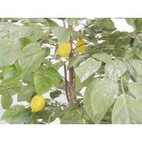 レモンの木 実付き (人工観葉植物 インテリア 造花 180cm)