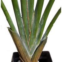 スモールトラベラーズパーム (人工観葉植物 インテリア 造花 ヤシ 160cm)