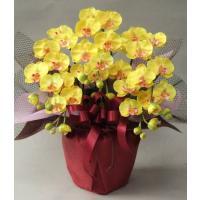 光触媒のコーティングで、除菌・消臭作用もある造花の胡蝶蘭。水やり不要で枯れない造花は、手間がかからな...