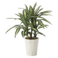 人工観葉植物 光触媒 観葉植物 フェイクグリーン インテリア インテリアグリーン 人工植物 幸福の木70 高さ70cm 送料無料