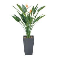 人工光触媒 観葉植物 人工観葉植物 観葉植物 造花 ストレチア花付き 高さ160cm フェイクグリーン 光の楽園 消臭 抗菌 防汚