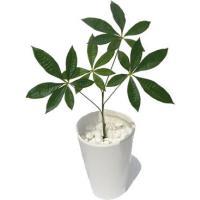 インテリアグリーン/フェイクグリーン パキラ グラブラ(アートフラワー 造花/人工観葉植物/光触媒)