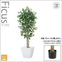人工観葉植物/ナチュラルフィカスツリー150cm/インテリアグリーン/造花 (別途料金で、無光触媒/CT触媒加工可)