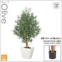 人工観葉植物/ナチュラオリーブツリー150cm   天然木/インテリアグリーン/造花 (別途料金で、無光触媒/CT触媒加工可)