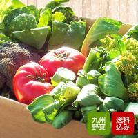 九州の新鮮とれたて野菜10品以上つめあわせた野菜セット。畑からご自宅まで最短翌日着だから鮮度抜群!苦...
