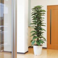 【送料無料】光の楽園 ジャイアントポトス 1.8m 145A350【Artificial flower Houseplant】【光触媒 造花 人工 観葉 植物 ギフト アレンジメント アート】