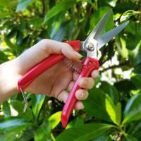 ・ガーデニングやフラワーアレンジメントなどいろいろ使える剪定ばさみ ・刃先も長く、枝などが込み合った...