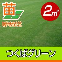 /苗の張り方説明書付き/ つくばグリーンは、暖地型芝の永年草で、北海道南部から沖縄まで利用できる芝生...