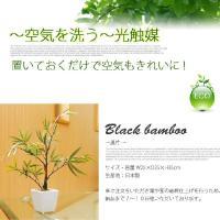 ブラックバンブー(黒竹) 光触媒 イミテーショングリーン