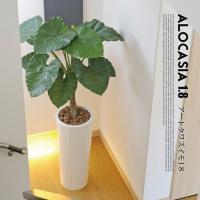 アートくわず芋1.8(alocasia odora) イミテーショングリーン