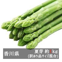 ■約1kg入り(全長約25cm程度)  香川県オリジナル品種アスパラガス「さぬきのめざめ」。 太くて...