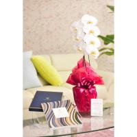 花とギフトのセット 胡蝶蘭 大輪1本立とカタログギフト(ヴァンウェスト/アルドワーズ)|biz-hana