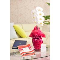 花とギフトのセット 胡蝶蘭 大輪1本立とカタログギフト(ヴァンウェスト/ルージュ)|biz-hana