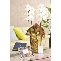 花とギフトのセット 胡蝶蘭 大輪2本立とカタログギフト(ヴァンウェスト/アルドワーズ) biz-hana